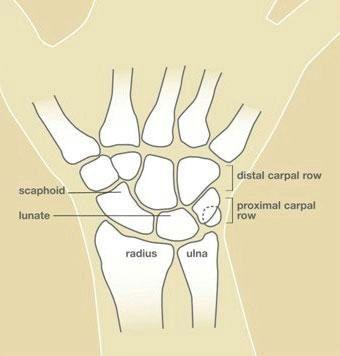 HandSurgery-49